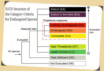 IUCN's Structure of the Category Criteria for Endangered Species graphic