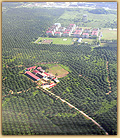 Photo of palm oil plantation in Indonesia