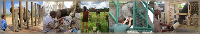 photos of elephants and zookeeper management
