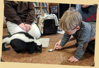 Young child with skunk photo