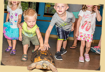 Young children with tortoise photo
