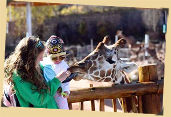 Giraffe feeding fun with young child in African Rift Valley, Cheyenne Mountain Zoo