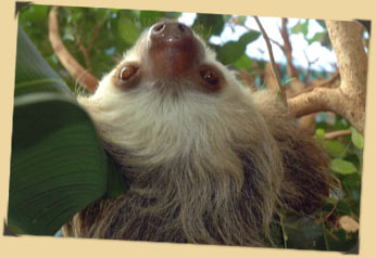 sloth portrait upside-down photo