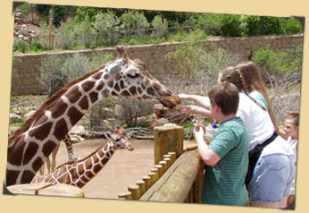 Kids and guests hand-feeding giraffes in the African Rift Valley exhibit at Cheyenne Mountain Zoo