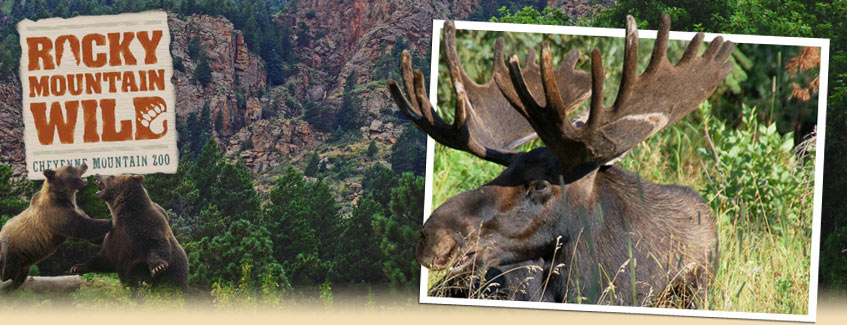 header graphic photo of Rocky Mountain Wild scene
