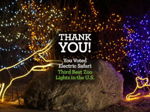 Electric Safari third best Zoo lights thank you!