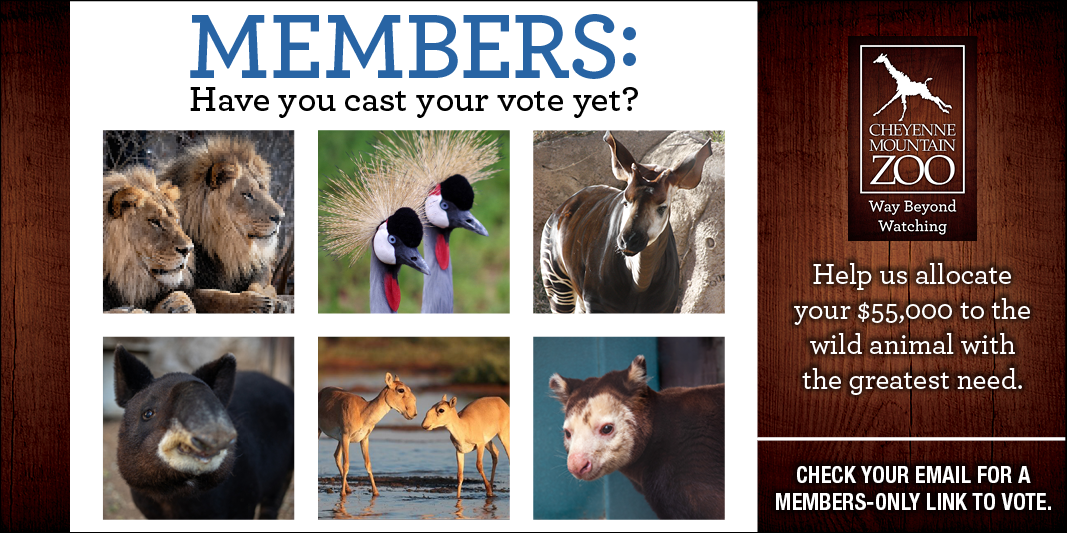 CMZoo Member voting for conservation projects