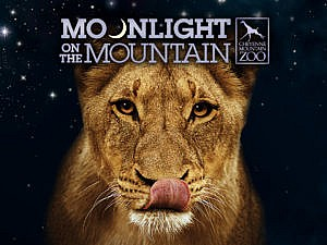 Moonlight on the Mountain hero graphic African lion licking lips photo