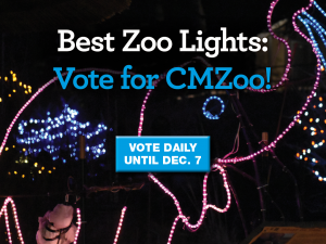 Vote for Electric Safari for Best Zoo Lights in USA Today's 10Best now through Dec. 7 - vote daily.