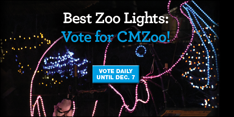 Vote for CMZoo Electric Safari for Best Zoo Lights