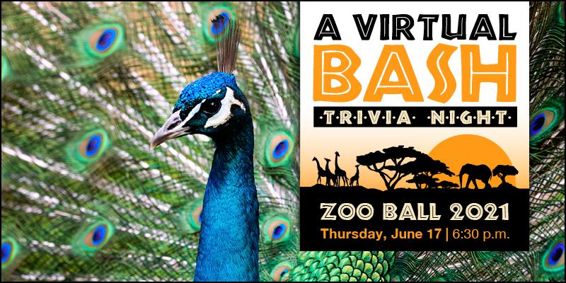 Zoo Ball 2021 - A Virtual Bash: Trivia Night!