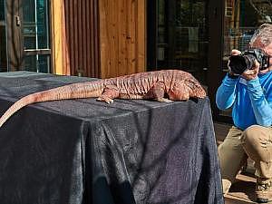 Outdoor School - Photography: Animal Portraits