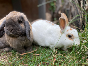 April Family Camp - Hopping into Spring with two rabbits in grass