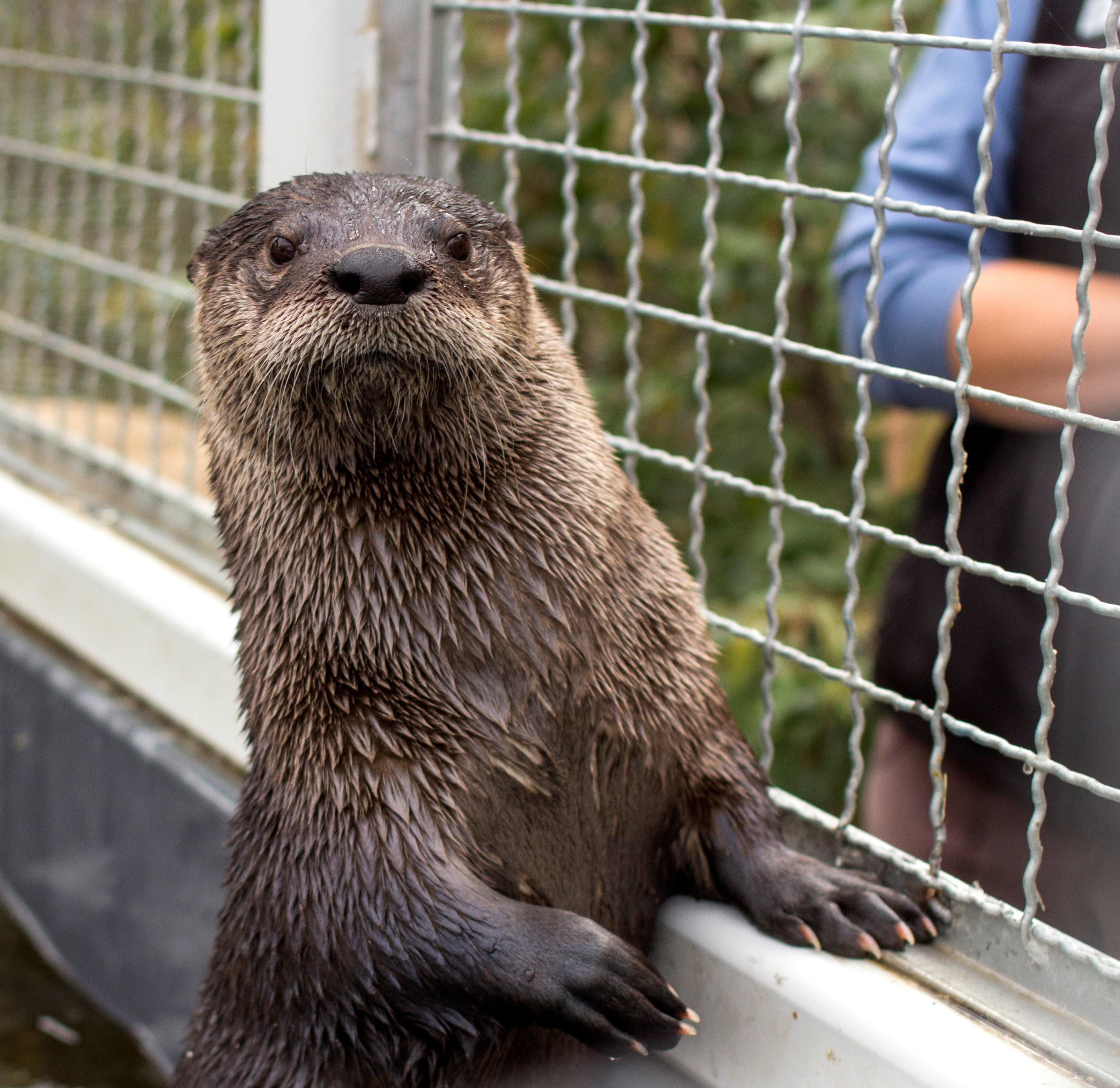 River Otter Encounter Cmzoo