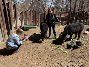 Staff filming video experience with mountain tapirs