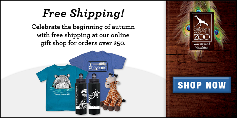 Online Gift Shop - October