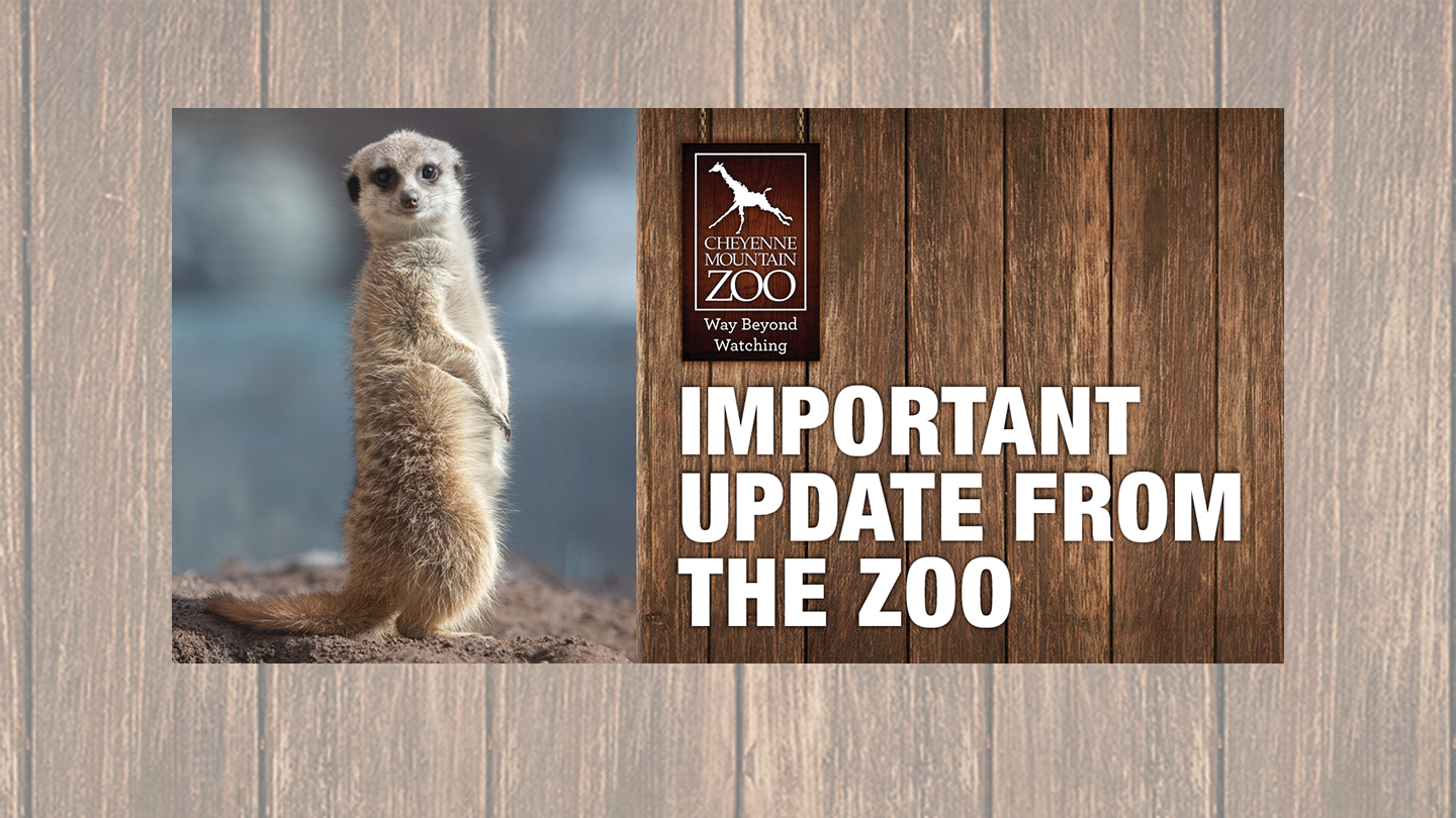 Cheyenne Mountain Zoo Closes Temporarily Plans To Reopen April 17 2020 Cmzoo