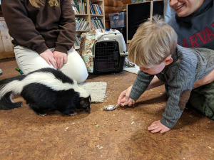 Boy guest with skunk and spoon during Creature Connection session