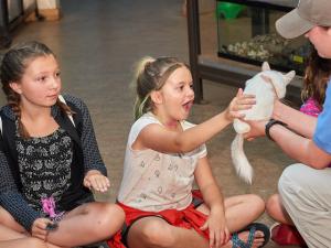 Kids meeting a chinchilla