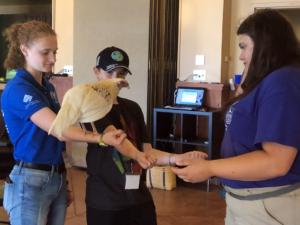 Teens training a chicken during workshop